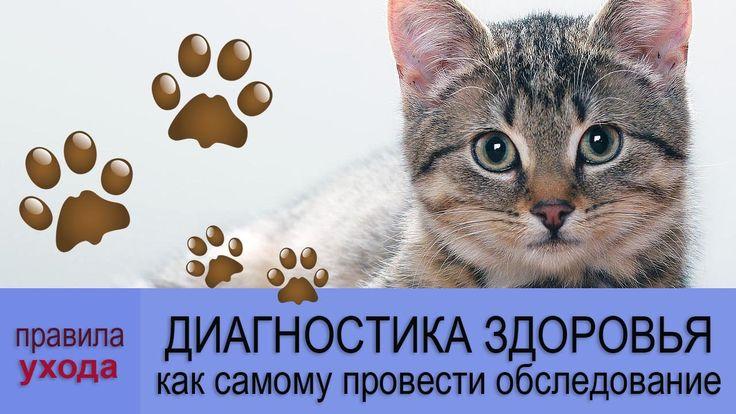 ВСЕ ПРО КОШЕК: Самостоятельная диагностика здоровья кошки