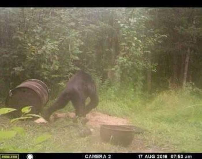 Another Bigfoot sighting came from a trail camera in the Upper Peninsula of…
