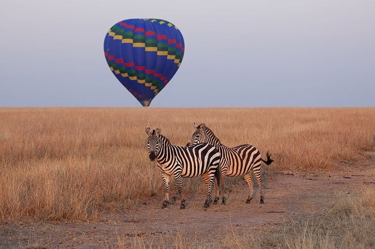 Zebrasis an awesome high qualityphoto canvas prints@300 dpi to furnish your interiors in an original way.