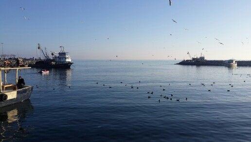 Balıkçı tekneleri ve martılar