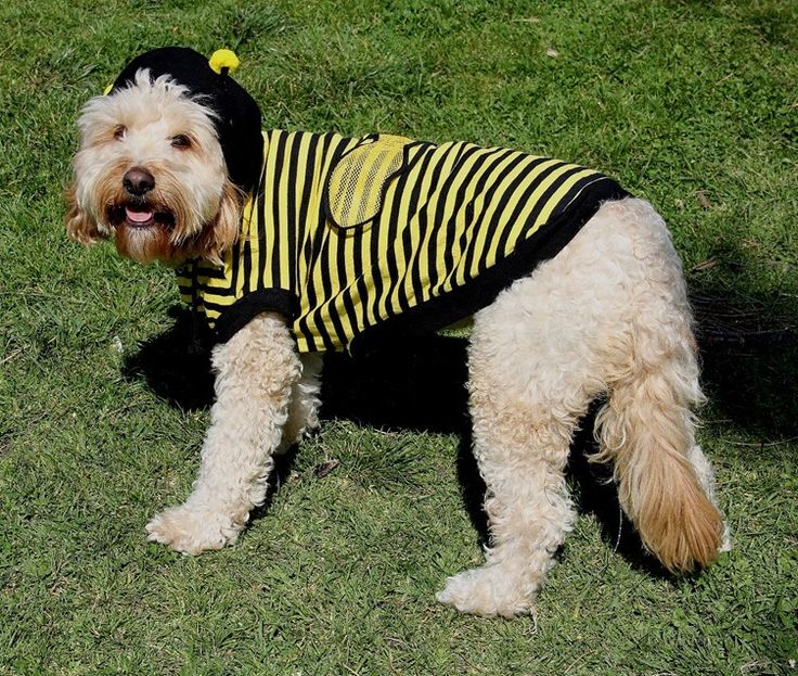 Bumble Bee Costume and Buddy