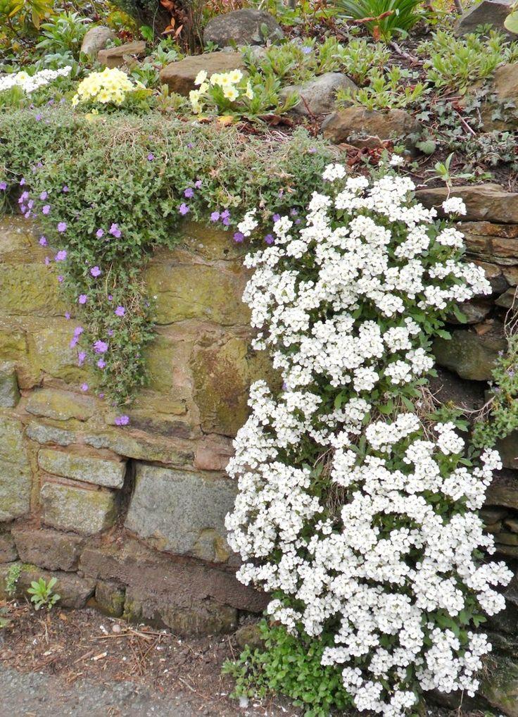 naturstein trockenmauer bepflanzen geignete pflanzen f r mauerfugen gartengl ck pinterest. Black Bedroom Furniture Sets. Home Design Ideas