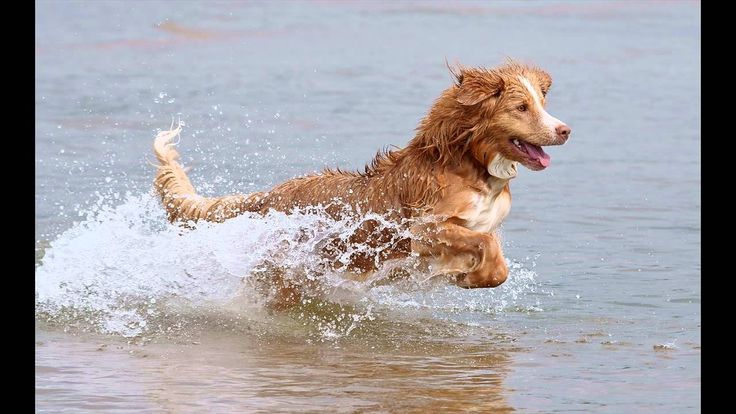 Coosing the right dog - Selecting the right dog breed - FREE Report