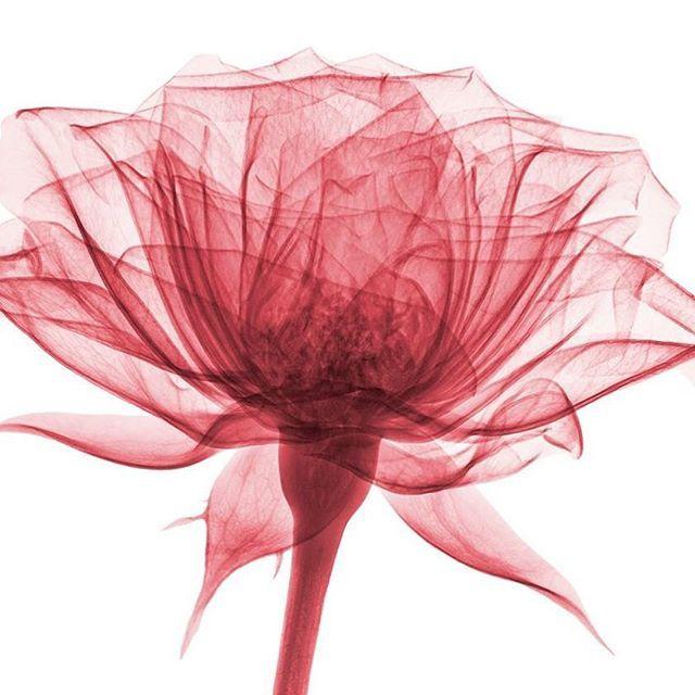 Nada mais simples do que uma flor. Nada mais sofisticado do que uma flor. Uma flor dura um instante e também a vida inteira. Uma flor é um presente e é uma essência. Uma flor nos convida à beleza. A de fora e a de dentro. Uma flor nos inspira. #naturaestaflor #qualéasuaflor #perfumarianatura