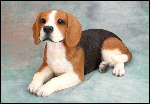 El North Country beagle, (beagle del Norte) era una raza de perros que existía en Gran Bretaña, probablemente hasta principios del siglo XIX.