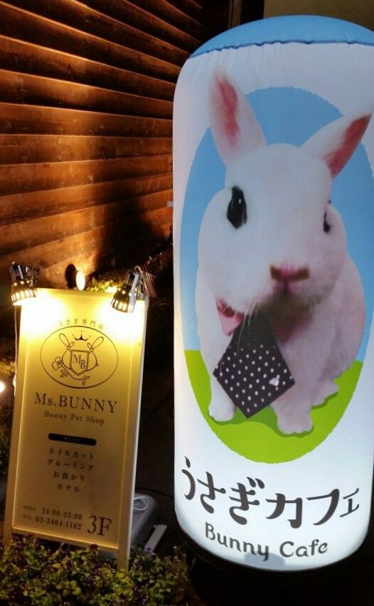 Read about our visit to a bunny cafe in Tokyo, Japan where we were able to hold and feed bunnies.