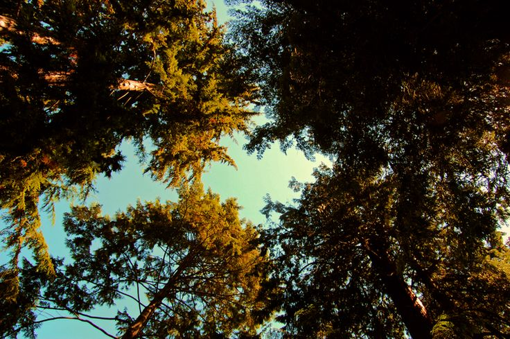 Admiring the treetops of Stanley Park    Vancouver, British Columbia