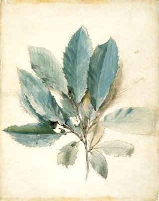 John Ruskin, 'Chestnut Leaves' - pen, ink & watercolor