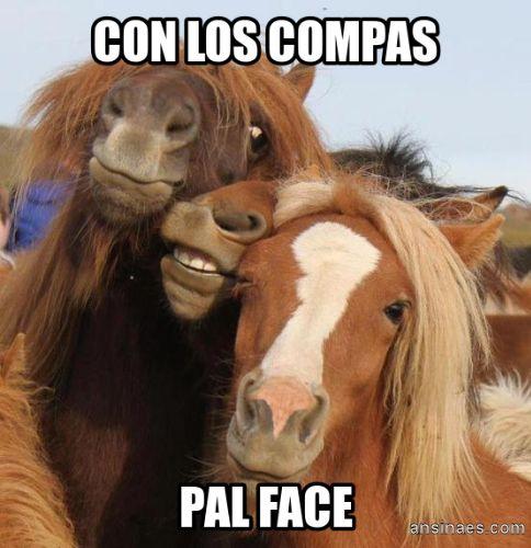 Memes de Animales - Con los compas pal face