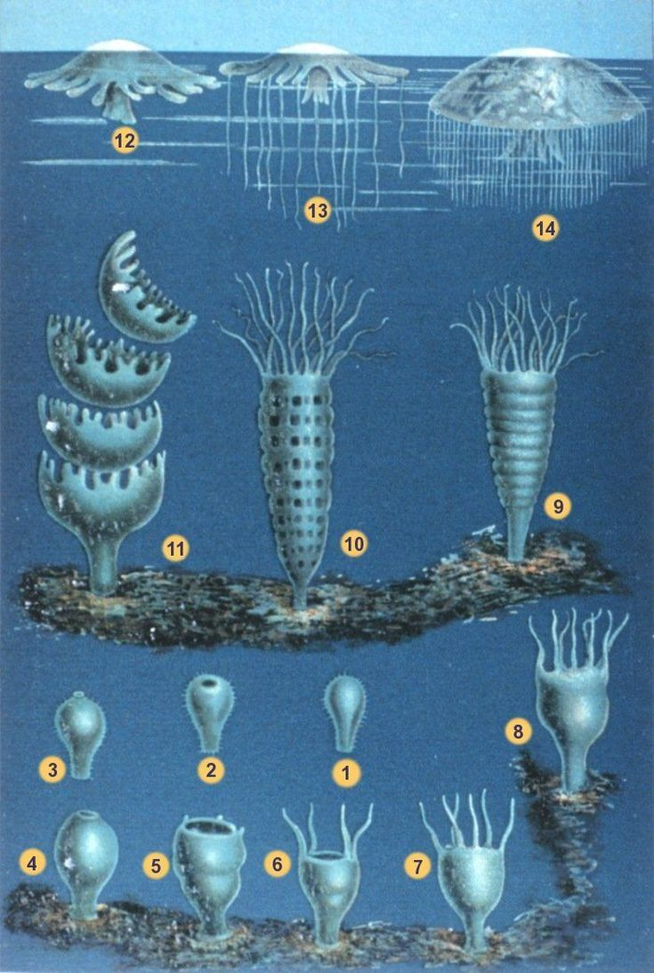 best 25 facts about jellyfish ideas on pinterest interesting