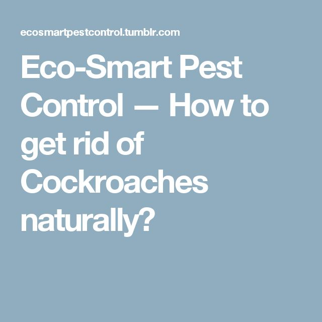 Eco-Smart Pest Control — How to get rid of Cockroaches naturally?