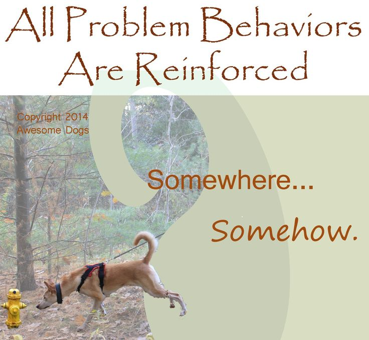 All problem behaviors are reinforced. Somewhere...somehow. - Eileen and Dogs
