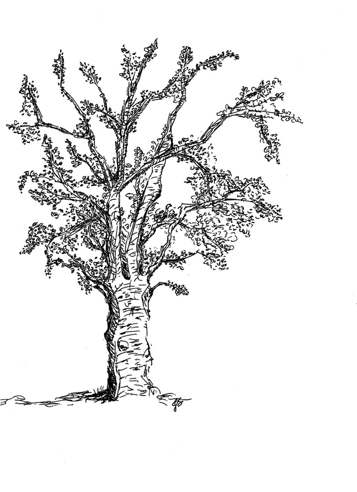 oak tree ink sketch art print