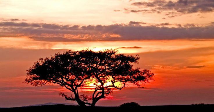 Sunset in the Serengeti! http://africatriedandtested.com/