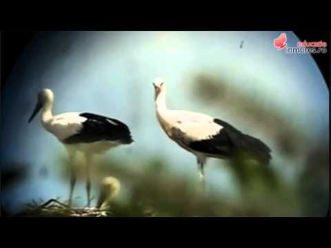 Păsările: Educatie In Mures