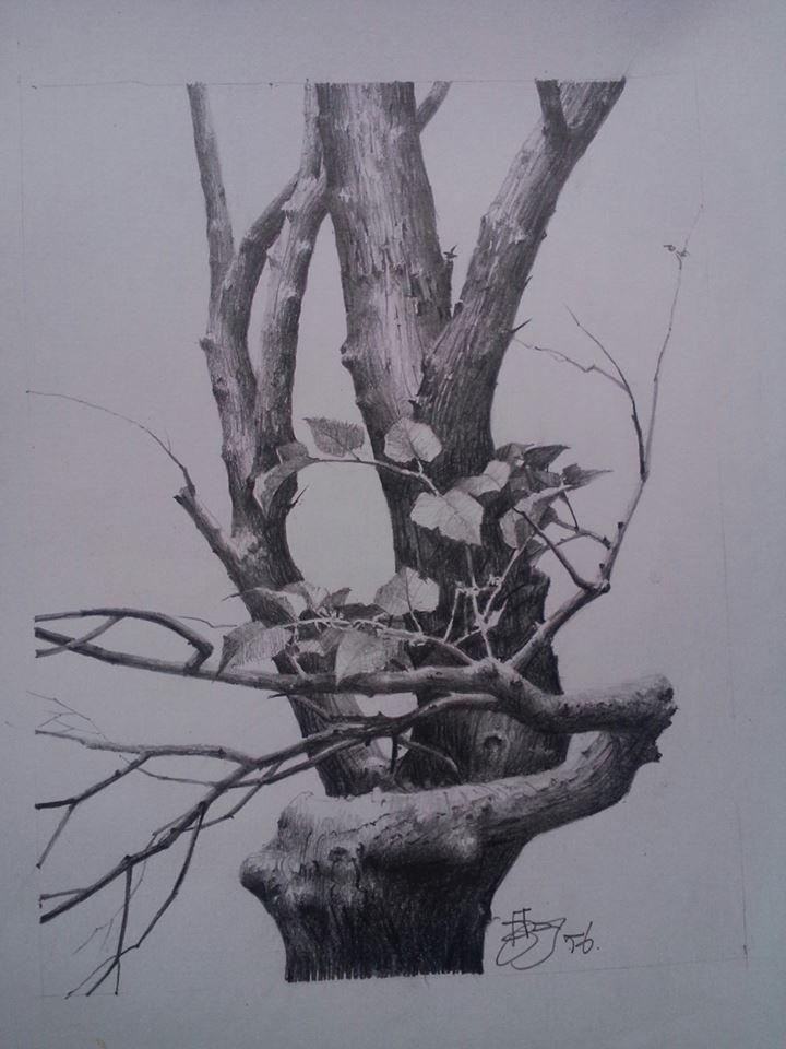 tree drawing by krongsak chulamorkodt
