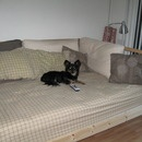 Dalselv Ikea Lounging Couch for my son's room.  sans dog.  nice to find a queen size headboard to put across the back.