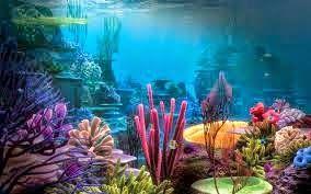 Frumuseți subacvatice!