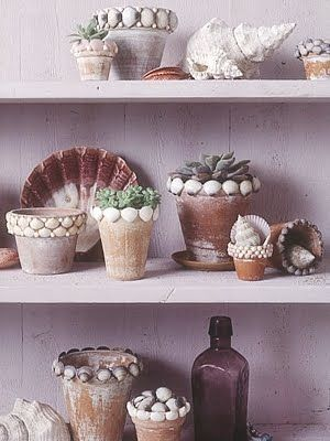 Calling ALL beach Lovers!   shell planters ~  a neat idea for usin g those seashells you collected on your last beach trip!