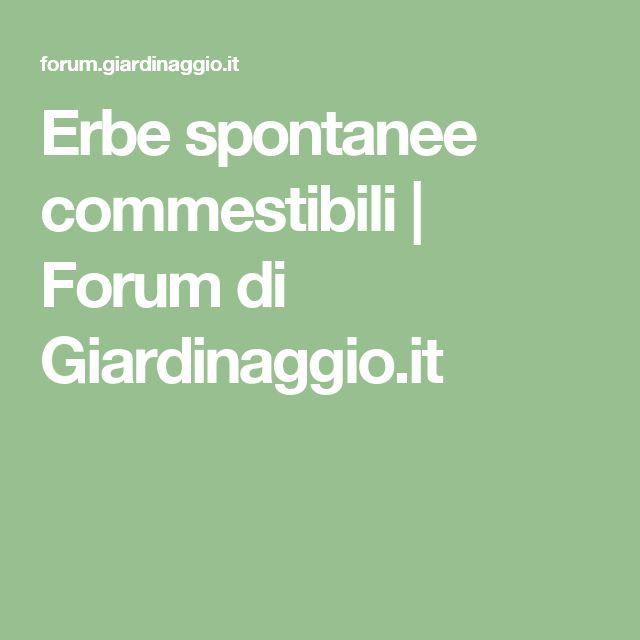 Erbe spontanee commestibili   Forum di Giardinaggio.it