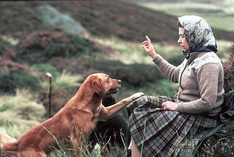 Sit! The Queen's skills as a dog handler is renowned. She using hand signals and whistle to control her Labradors