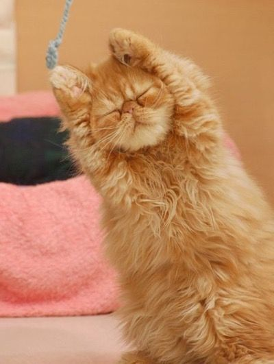 Kitty is really into his yoga session !