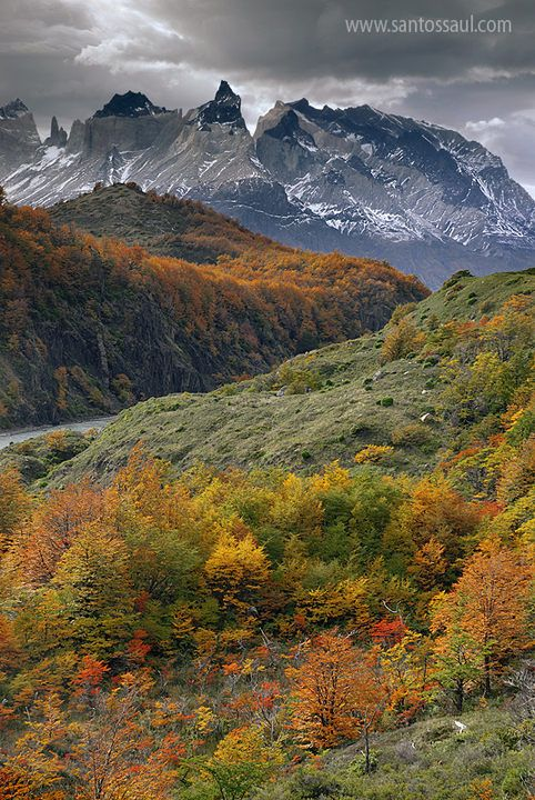 Autumn, Torres del Paine, National Park,  Patagonia, Chile