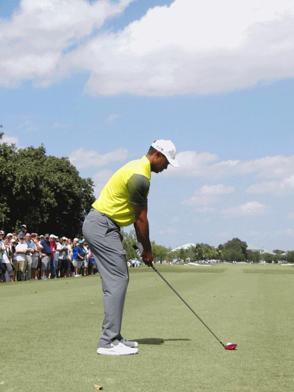 Tiger Woods 2014 Swing Sequence GIF