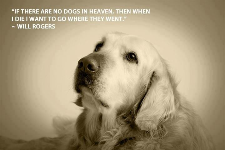 Do And Frases: Will Rogers Quote About Dogs.