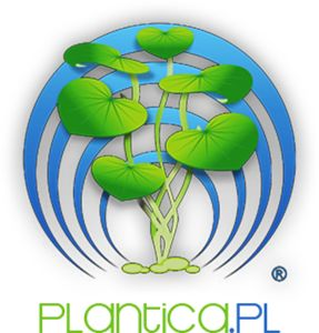 Technika CO2 | Plantica.pl