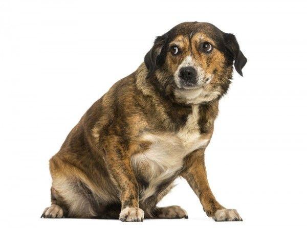 Assim como nós, cachorros também sentem medo! Entretanto, cada cão tem medos e reações diferentes, então é muito importante saber como agir nesse tipo de situação. Saiba mais sobre como ajudar seu pet.