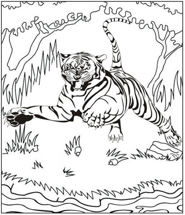 Sabertooth Tiger Tiger Art Sabertooth Tiger Animal Posters