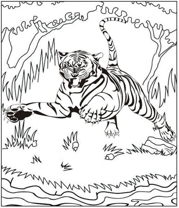 Tiger Roaring And Jumping Coloring Page Dengan Gambar