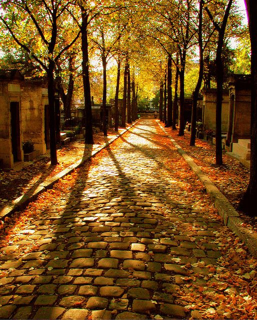 Fall walk down the cobble stone path