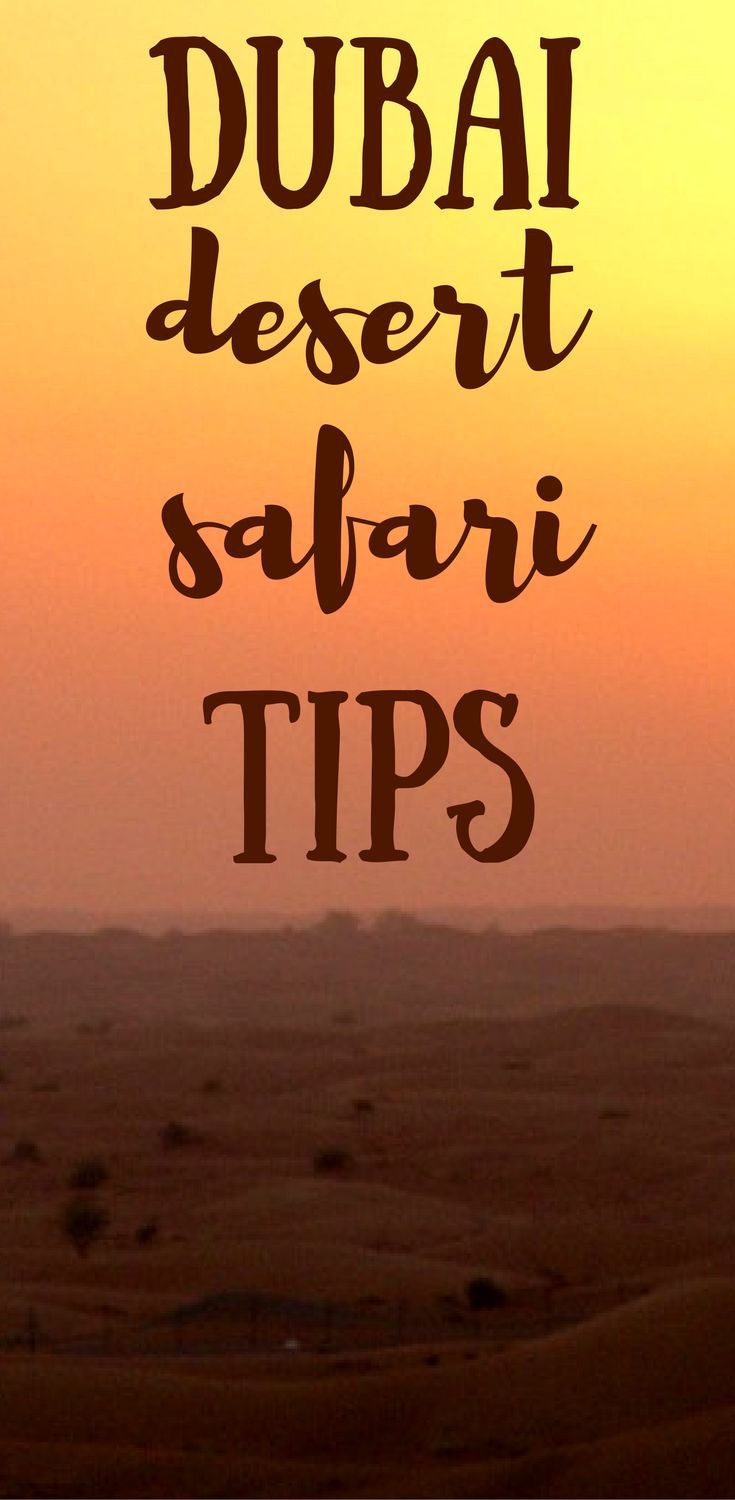 Dubai desert safaris are a must do when visiting Dubai! Find out more about desert safaris in Dubai in this post, including insider tips for finding the perfect safari!