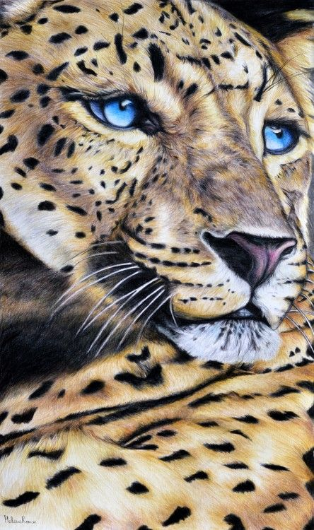 Dessin d'une léopard réalisé au crayon de couleur.Drawing of leopard realized with colored pencil. ©Hélène Roux http://www.artmajeur.com/heleneroux/                                                                                                                                                     Plus