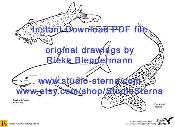 Hai Zeichnung digital download Bild PDF Datei von StudioSterna