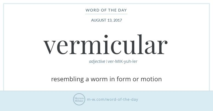 What does the word vermicular have in common with the pasta on your plate? If you're eating vermicelli (a spaghetti-like pasta made in long thin strings) the answer is vermis, a Latin noun meaning '