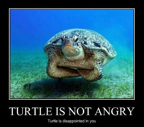 Cute Turtles   Disappointed Turtle - Funny Pictures, Photos and Images