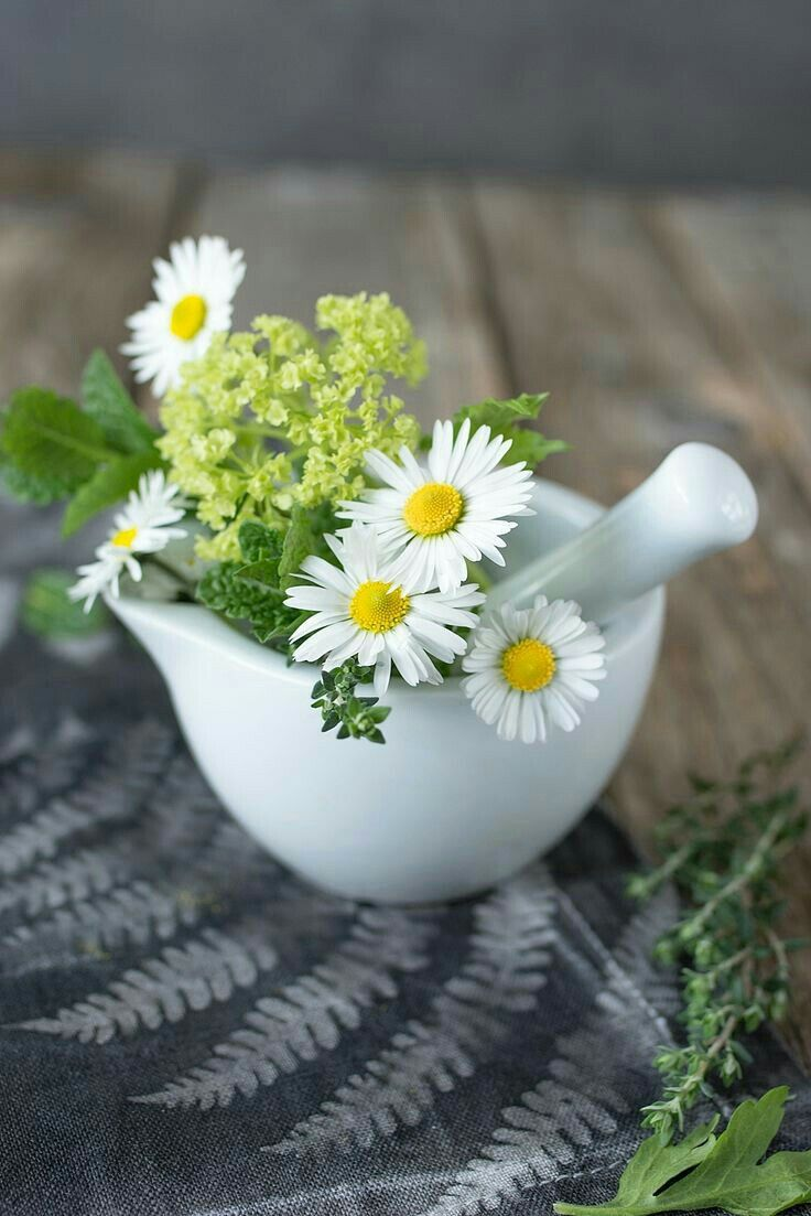 1497 best flowers images on pinterest margarita flower daisies find this pin and more on flowers by jumauto izmirmasajfo