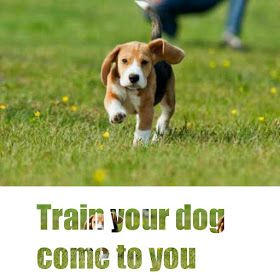 The Pets Care Train Your Dog Come To You Dog Clicker Training