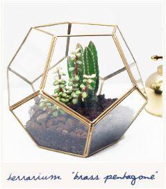 * Brass pentagone terrarium