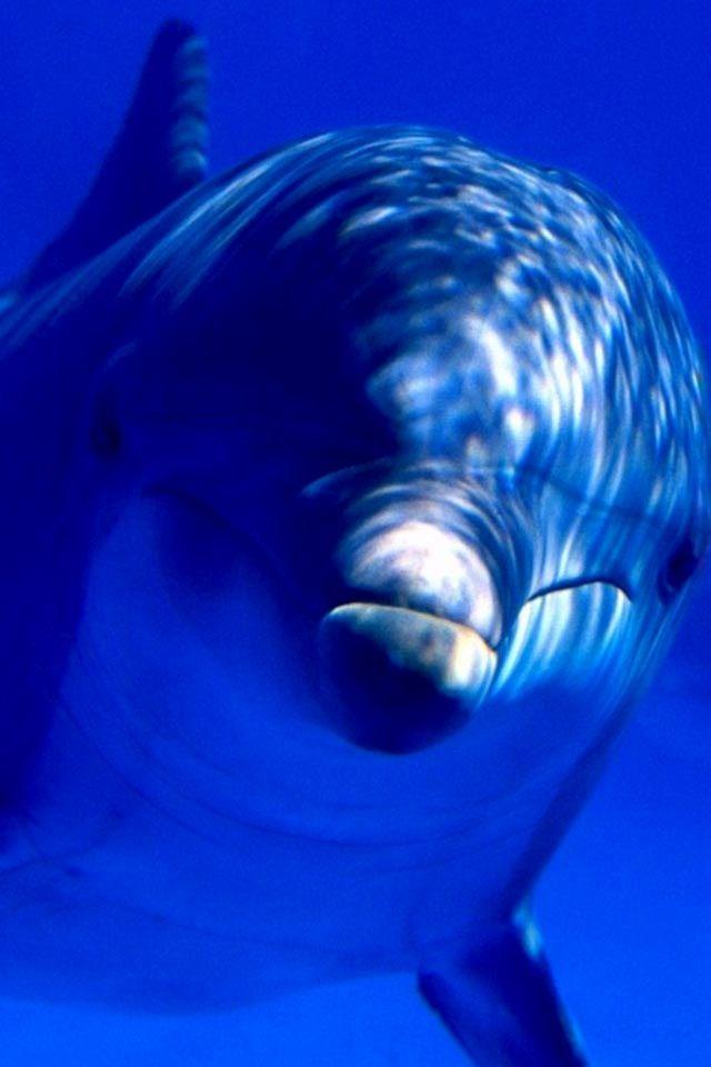 Dolphin image via WallpapersHD