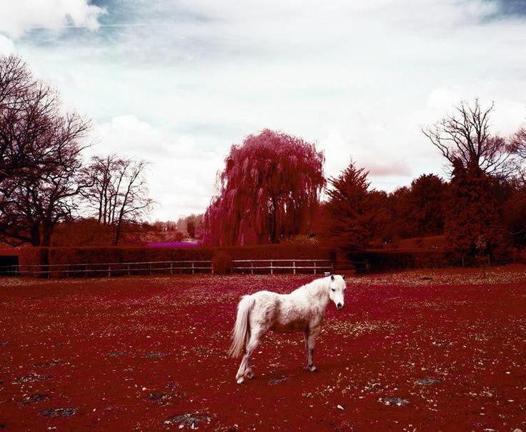 Fotos com infravermelho revelam o invisível em regiões de desastres ambientais