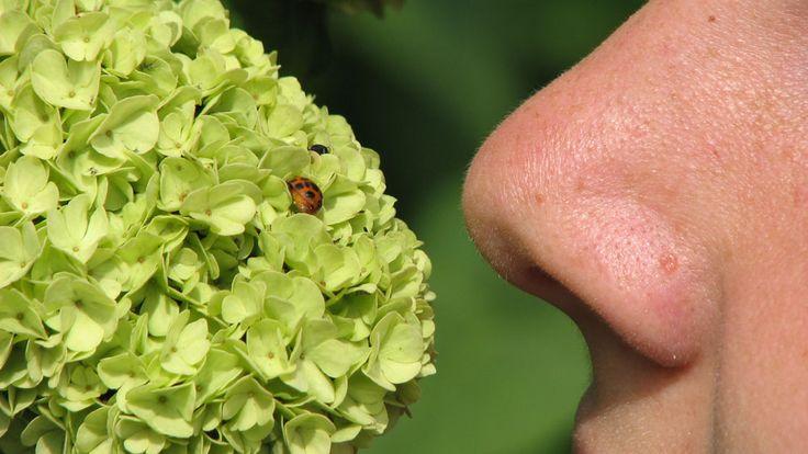 ヒトの鼻から新規抗生物質 | Vol. 13 No. 10 |  NATURE http://j.mp/2dLpU70  記事中: ヒトの鼻腔に棲む共生細菌が、有害な薬剤耐性菌を死滅させる新規抗生物質を産生していた!この抗生物質は、MRSA(殆どの抗生物質の効かない化膿菌)感染との闘いにおいて、新戦力になる可能性がある。Nature Research