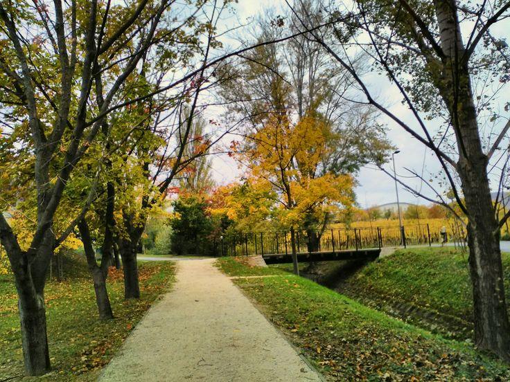 Countryside autumn