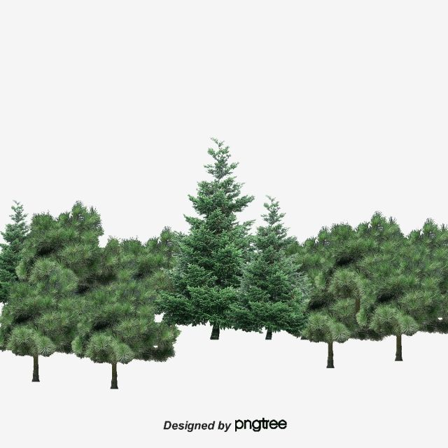 Forest Trees Grove Trees Spring Clips Png Transparent Clipart Image And Psd File For Free Download Autumn Trees Clipart Images Tree Psd