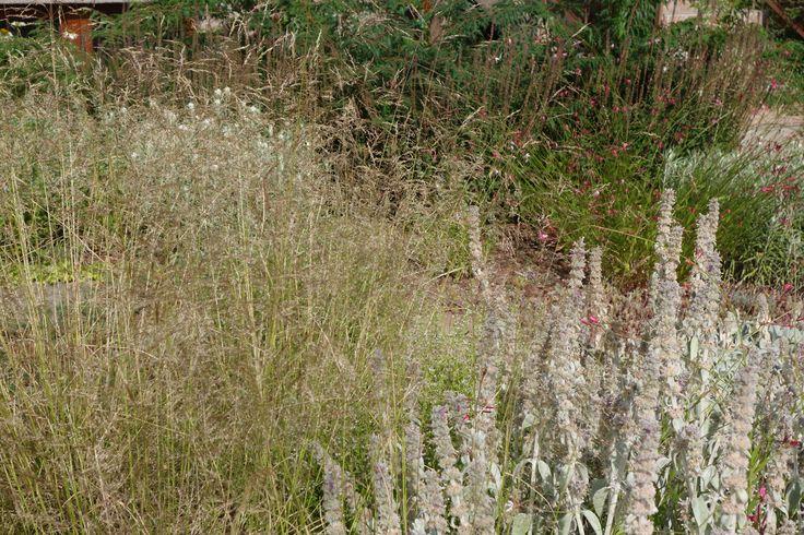 Augustín,Horáková / súkromná záhrada / private garden / Tekovské Nemce
