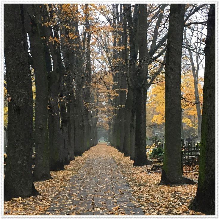 Autumn in Poland.  Old Cemetery in Łódź. '2014