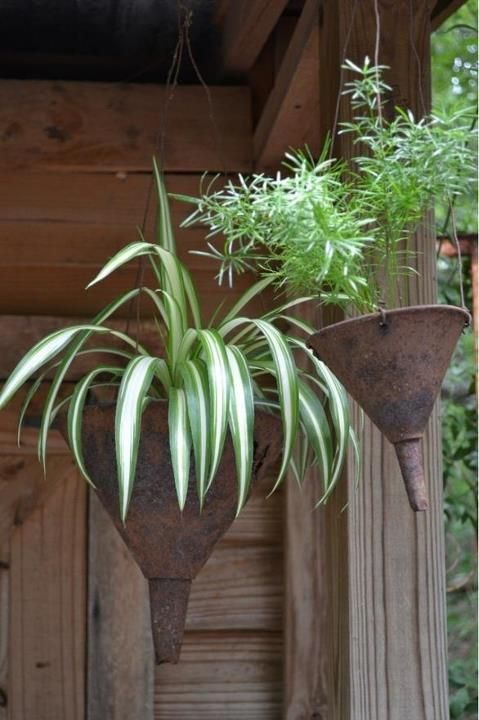 Here is another great idea for repurposing in the garden.I particularly like the fact that the old funnels are almost purpose built with their  on The Owner-Builder Network  http://theownerbuildernetwork.com.au/wp-content/blogs.dir/1/files/gardening-ideas/Gardening-Ideas-4.jpg